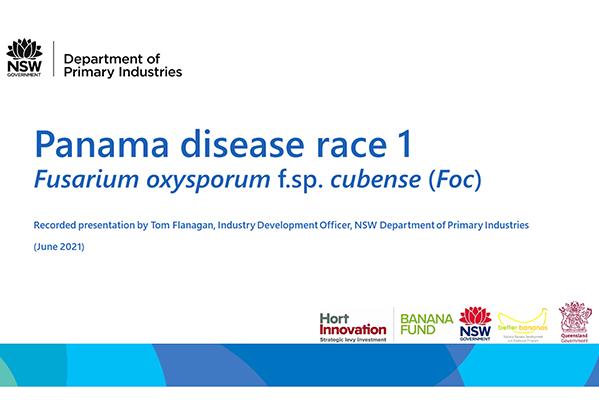 Panama disease race 1 (recorded presentation)